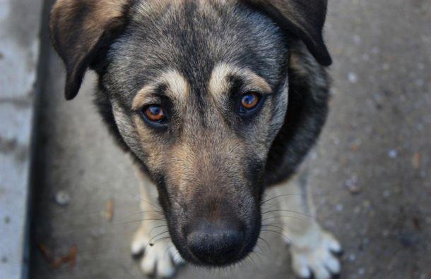 Черный Пёс Петербург неотдаст своих собак