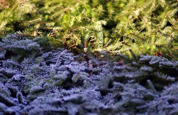 Колесов: вПетербурге похолодает 18октября