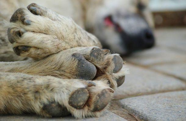 Убить нельзя вернуть: суд запретил возвращать стерилизованных собак туда, где они жили