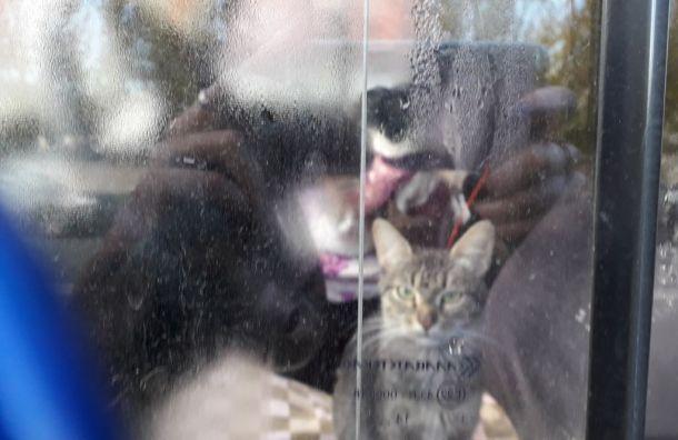 Кошки исобаки второй день сидят запертыми вмашине вПетербурге