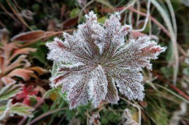 Синоптики прогнозируют холода вПетербурге