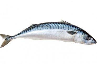 Ульяновского депутата оштрафовали заброски рыбой вколлег