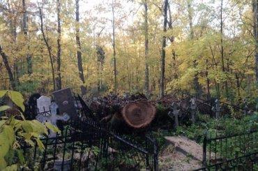 Спиленные деревья рухнули намогилы Серафимовского