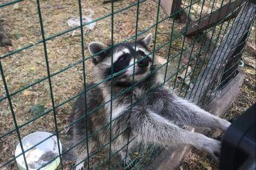 Зоопарк Зеленогорска нарушал ветеринарные нормы