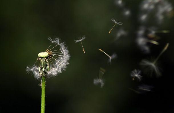 МЧС обещает ввоскресенье сильный ветер