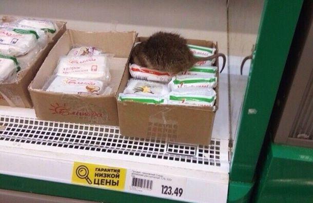 Покупатели увидели крысу наприлавке «О'кея» вГатчине