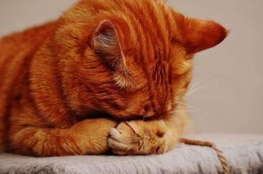 Кота признали виновным взатоплении магазина вНовокузнецке