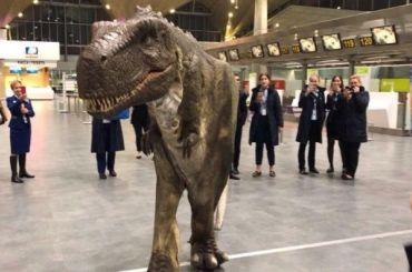 Ночью поаэропорту Пулково бегал динозавр