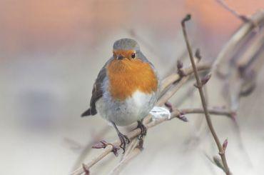Смольный объявил оначале сезона зимней подкормки диких птиц