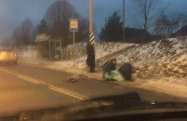 НаКиевском шоссе сбили насмерть двух человек