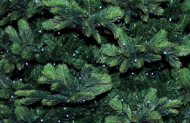 Неворуйте елки, мыдадим бесплатно