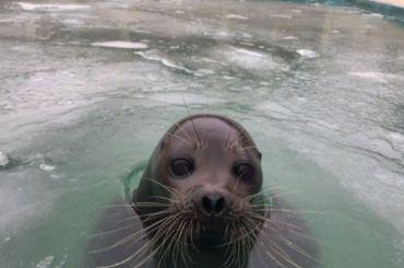 Бассейн тюленя Крошика замерз ипокрылся льдом