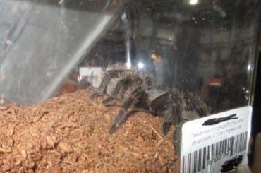 Ядовитых пауков досмотрели ваэропорту Пулково