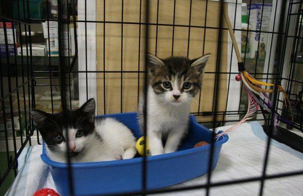 «Лёнькин кот» будет выдавать приютам инвалидные коляски для животных