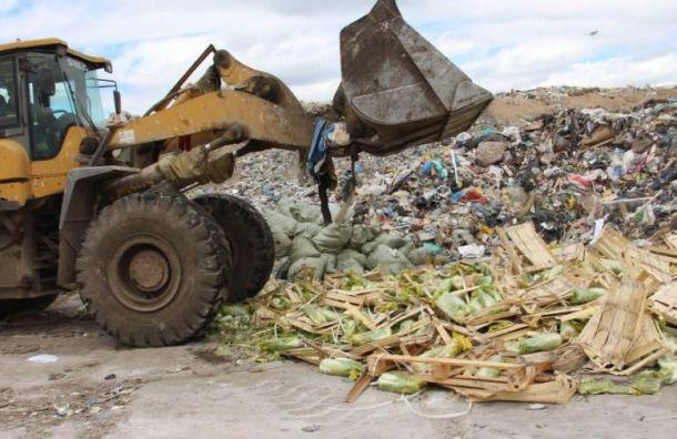 929 тонн санкционки уничтожили запрошлый год награнице Петербурга