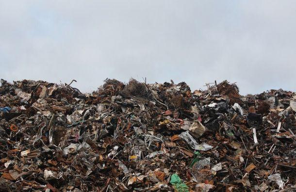 Экоактивистам Петербурга согласовали митинг против мусорных полигонов