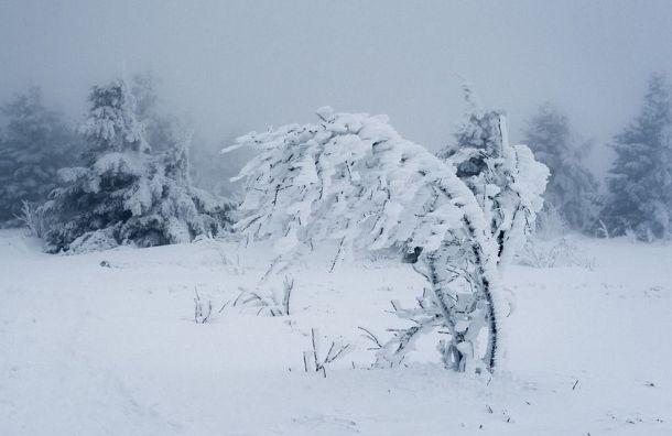 МЧС предупреждает петербуржцев оснежной буре