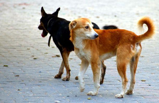 Верховный суд рассмотрит дело обродячих собаках поапелляции Смольного