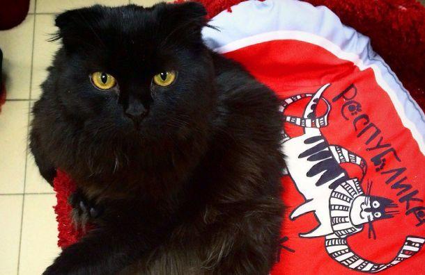 Пятый День кастрации животных пройдет вПетербурге