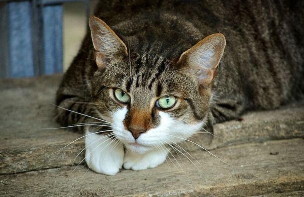 Акция побесплатной кастрации кошек исобак пройдет вПетербурге