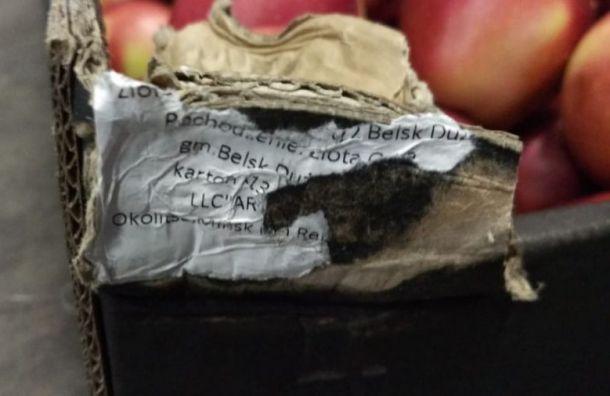 Крупную партию польских яблок уничтожили вПетербурге