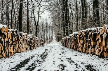 Вишневский попросил Беглова недопустить вырубки 10 гектаров леса
