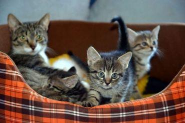 Домашних животных разрешат перевозить впоезде «Невский экспресс»