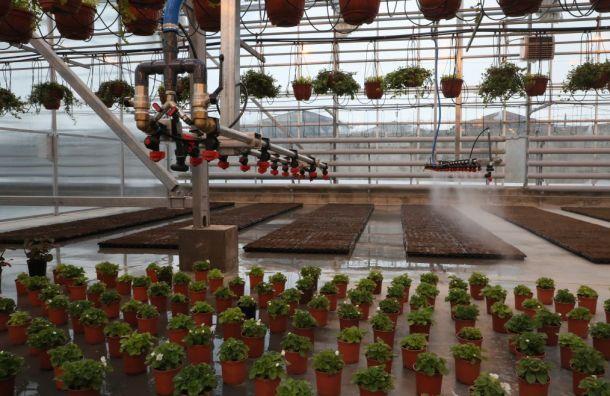 Весной вПетербурге высадят 8 млн цветов