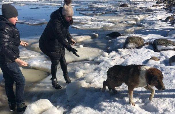 Подросток вПетергофе спас провалившуюся под лед собаку