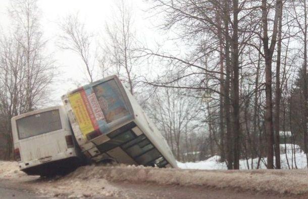 Два автобуса столкнулись под Петербургом
