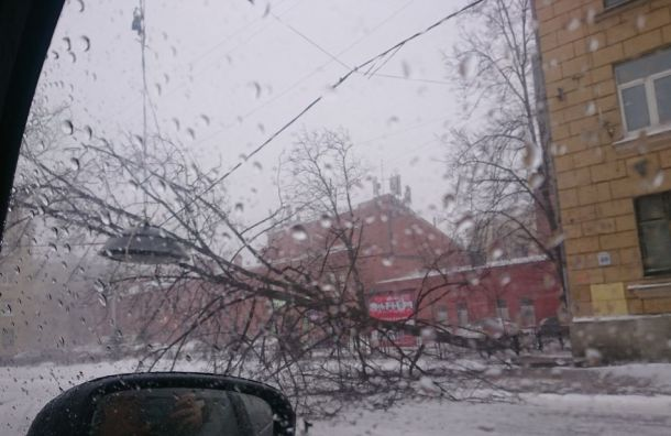 Спасатели предупредили одальнейшем усилении ветра вПетербурге