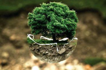 Петербург вошел втоп-10 национального экологического рейтинга