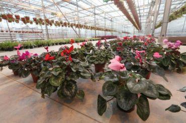 Весной Петербург станет ярче на8 млн цветов