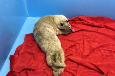 Двух детенышей тюленей спасли вФинском заливе
