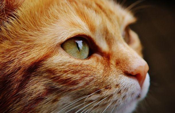 Охранник ЛГУ ударил обпол беременную кошку