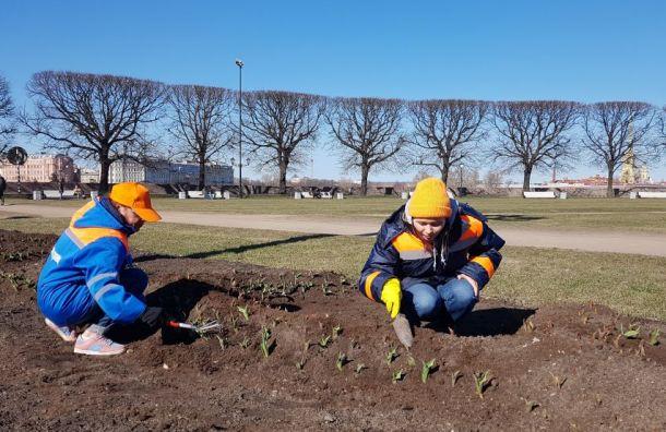 Садовники начали украшать цветники Петербурга