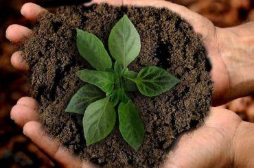 Ученых вобласти экологии иприродопользования поддержат грантами