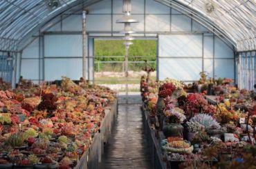 Ginza вложится вблагоустройство оранжерей уТавического сада