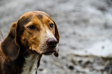 Верховный судРФ неподдержал Смольный вспоре оботлове собак