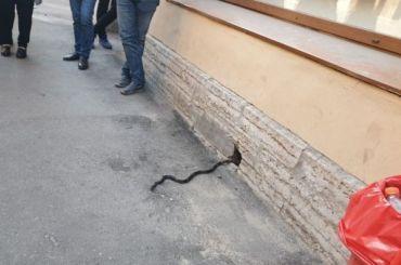 Змея напугала покупателей алкомаркета вПетербурге