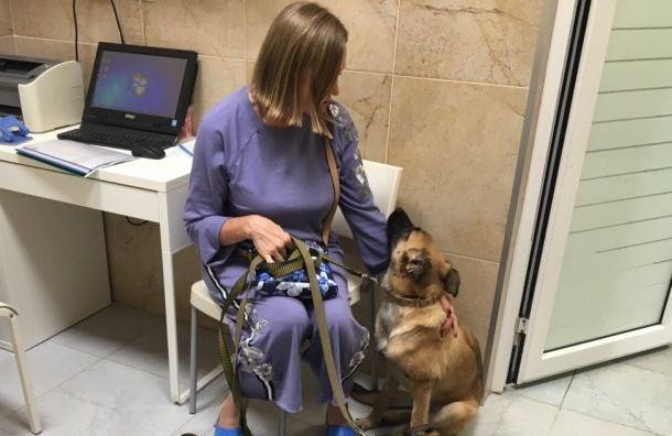 Выброшенная изокна четвертого этажа собака нашла новых хозяев