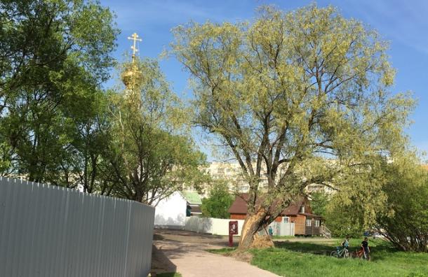 Петербуржцы выйдут против храма вЮжно-Приморском парке