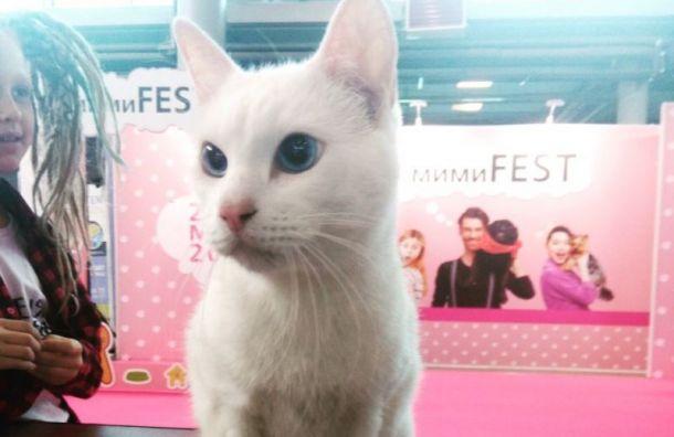Эрмитажный кот Ахилл посетил выставку животных в«Ленэкпо»