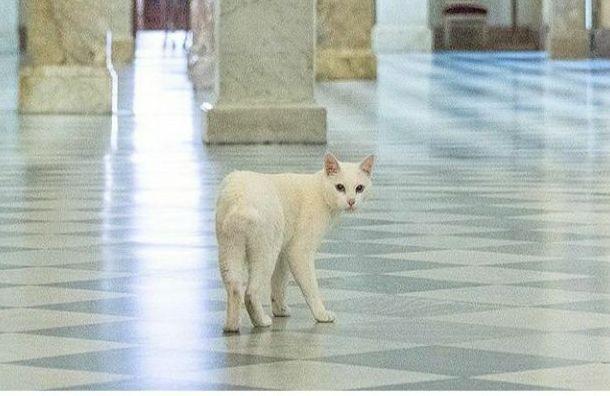 День Эрмитажного кота пройдет вЭрмитаже ввыходные