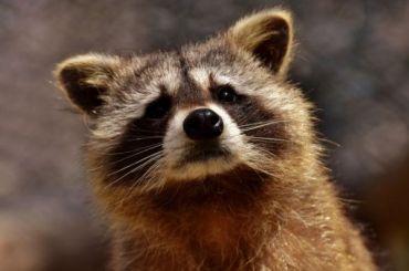 Прокуратура нашла нарушения всодержании животных вприюте «Полянка»