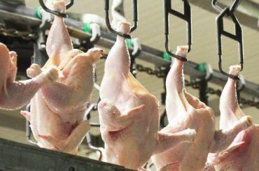 Производство мяса птицы вРоссии стало восстанавливаться