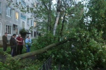 Дерево рухнуло из-за сильного ветра вНевском районе