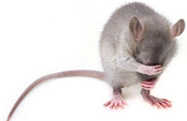 ФСИН разберется с«крысами» после скандального банкета рецидивистов
