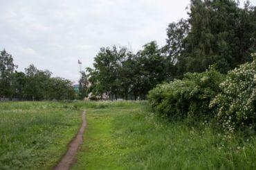 Активисты попросили Путина защитить Муринский парк отзастройки