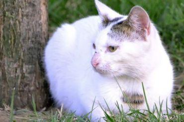 Охранника ЛГУ накажут заизбиение беременной кошки